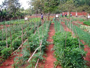 Agricultural Training, Tools, and Incentives moves Malawi towards Independence