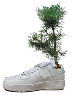 Shoes for Trees