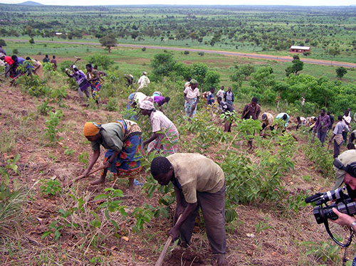Villagers planting trees