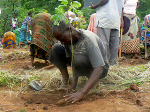 Fighting Deforestation - Man plants a tree