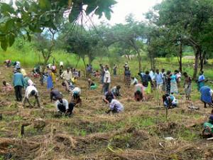 tree planting - Malawi