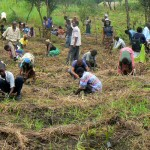 Malawians planting trees in Shoes for Trees programs