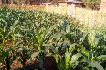 DRIP GARDENS IMPORTANT TO EXIT FAMINE