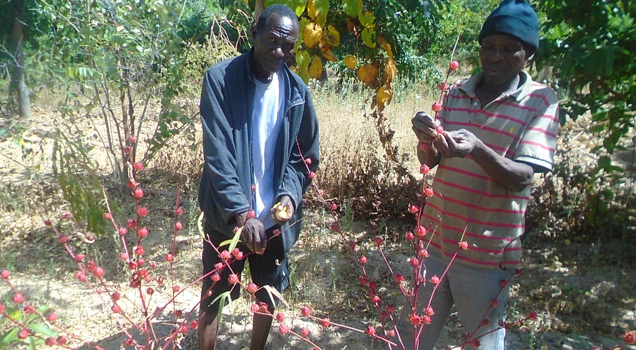 MEDICINAL PLANTS SOURCE OF HOPE | Malawi Project