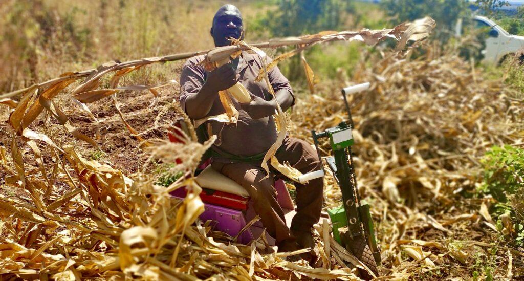 Watson Mchiena in his maize field