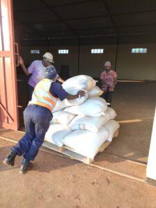 Storing maize